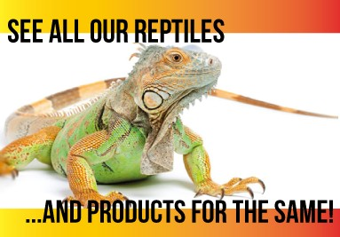 In This category find many articles related to Reptiles