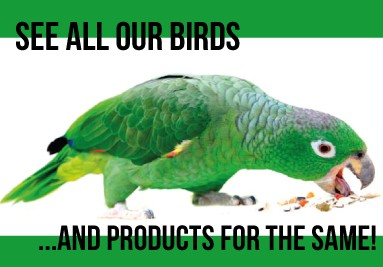 See All our Birds and Products!