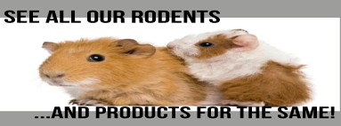 In this category you will find many articles related to Rodents