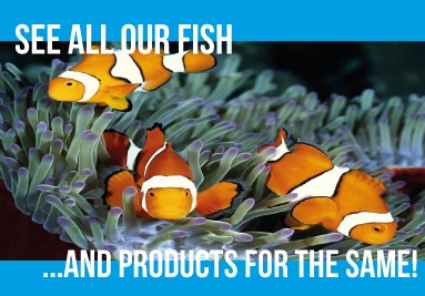 All Our Fish and Products
